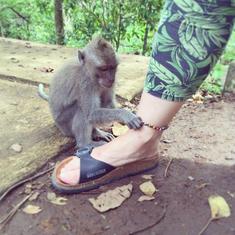 Monkey forest!